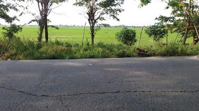 TANAH MURAH CIKARANG BEKASI 155 RIBU/METER BISNIS PERUMAHAN