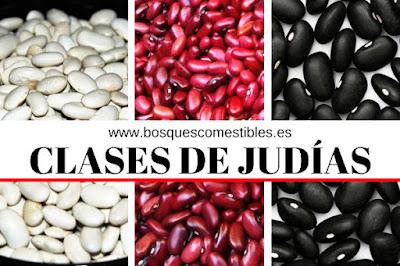 Alubias, Judiones, Pochas, Pilaricas, Judías Azuki, Judías Rojas...