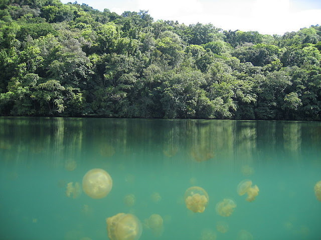 Jellyfish in a lake