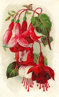 flower vintage trade card fushia illustration digital clipart