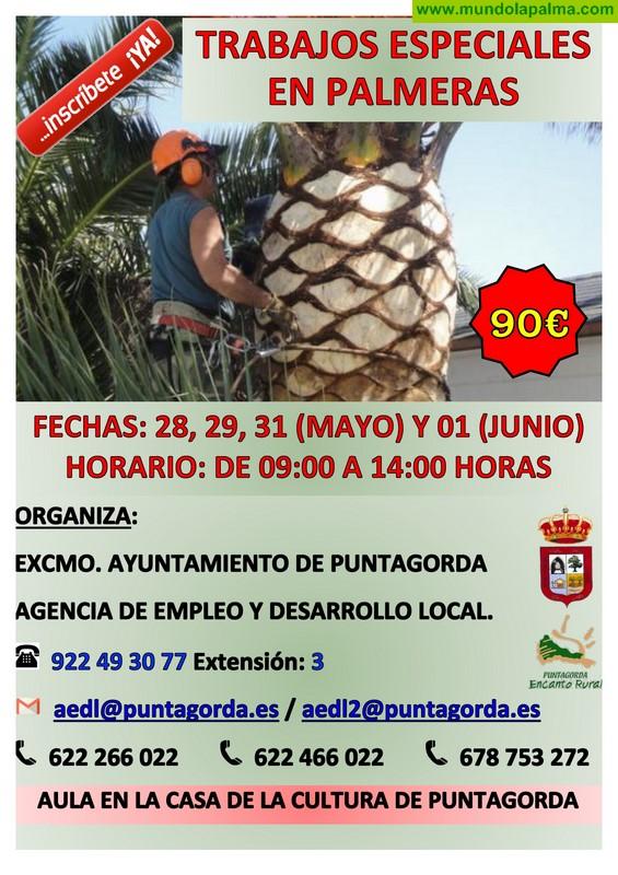 Curso Trabajos especiales en palmeras en Puntagorda