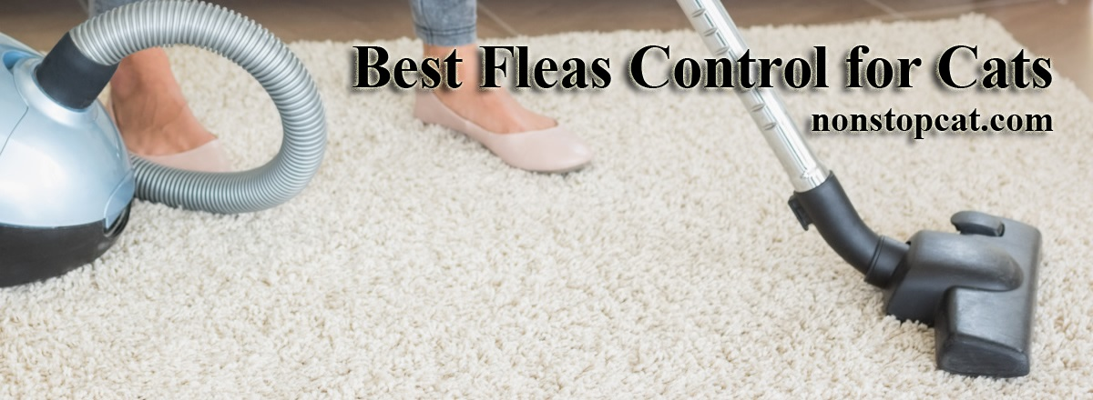 Best Fleas Control for Cats