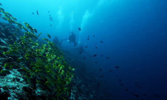 Photo of coral reef and the fishes with two divers