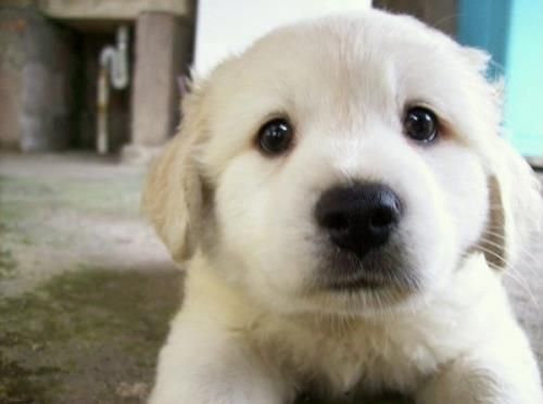 Cách dạy chó ngoan ngay khi mới về nhà