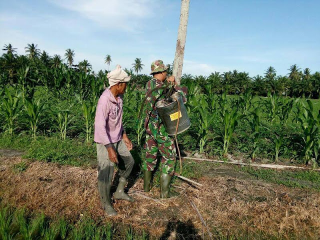 Koramil 14/Babinsa Sertu D.Sirait Dampingi Petani Lakukan Perawaran Tanaman Jagung di Desa Sukamakmur