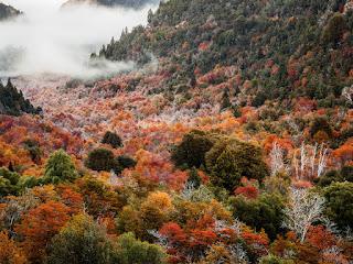 07 Parque Nacional Nahuel Huapi - Argentina