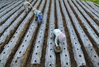 usaha pupuk pertanian, bisnis pupuk, bisnis pupuk pertanian, modal usaha pupuk, pupuk