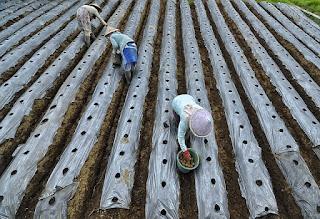 Rahasia Rincian Biaya Modal Usaha Pupuk Pertanian untuk Pemula