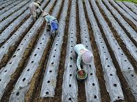 Rincian Biaya Modal Perjuangan Pupuk Pertanian Untuk Pemula