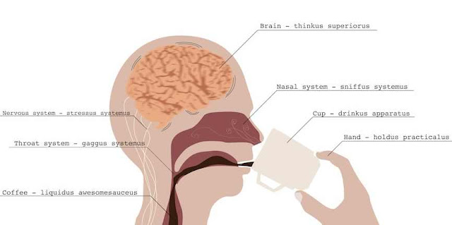 the effects of coffee on the brain