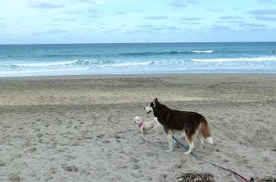 Dogs on the beach,  Dog friendly Juno Beach, Dog friendly Jupiter beach, dog beaches in Florida