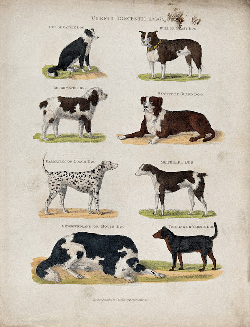 Useful Domestic Dogs, this month's Pets in Art in the Companion Animal Psychology newsletter for March 2019