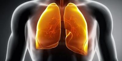 obat paru paru tradisional