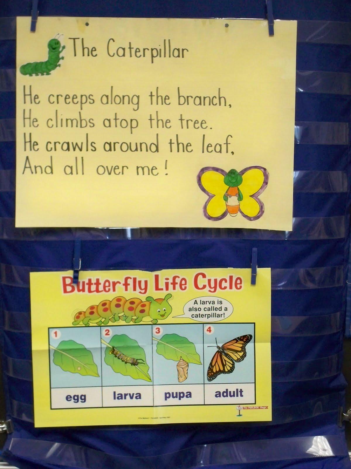 First Grade Best Butterfly Fun