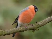 Download Kumpulan Suara Kicau Burung Untuk Masteran dan Pemikat