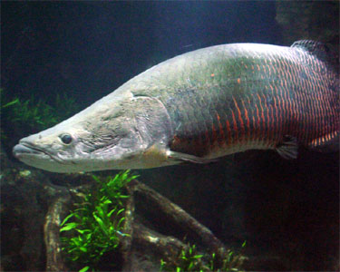 mother nature: Nile Perch Monster of River