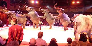 Los elefantes del Krone Circus.