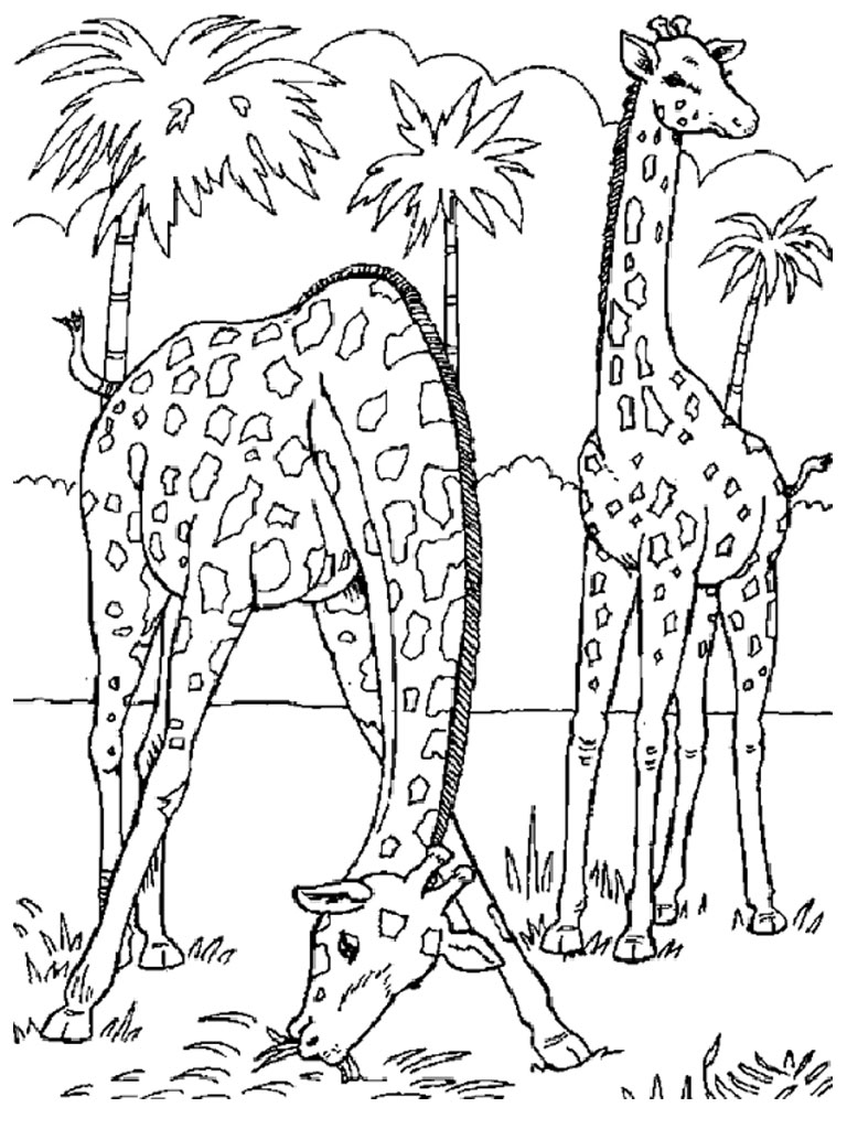 giraffe in wild life coloring pages for free