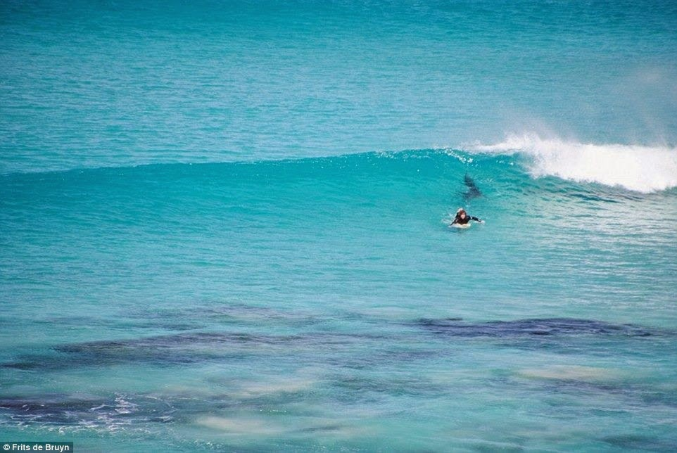 surfistas perseguido por tiburon 03