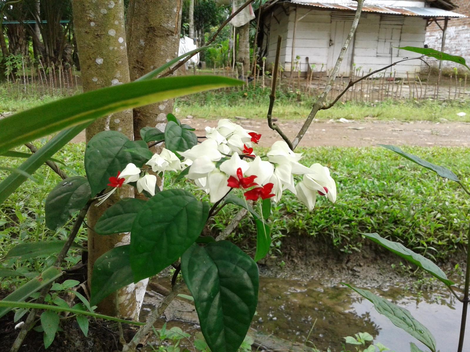 Bunga ini indah tapi tidak tahu namanya