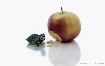 imagen de tortuguita comiendo manzana