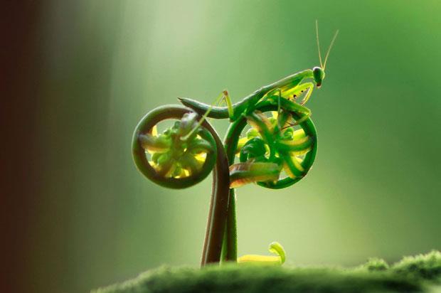 Vpinfobr Louva Deus De Bike