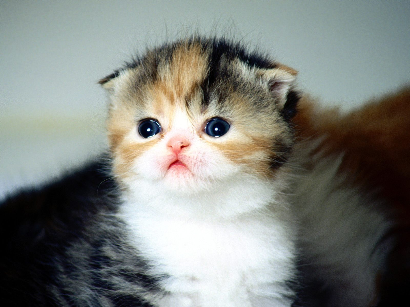 Wallpapers Dhamaka Cute Baby Cat Wallpapers And Cute Baby Cat Pics And Cat Images