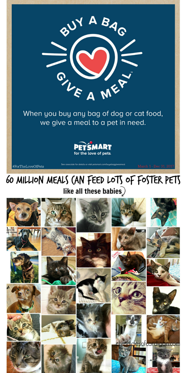 PetSmart Buy a Bag, Give a Meal logo over collage of lots of foster pet faces