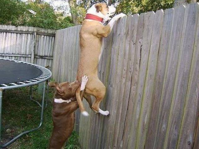 Cute dogs - part 228, cute dog photo, best funny dog picture
