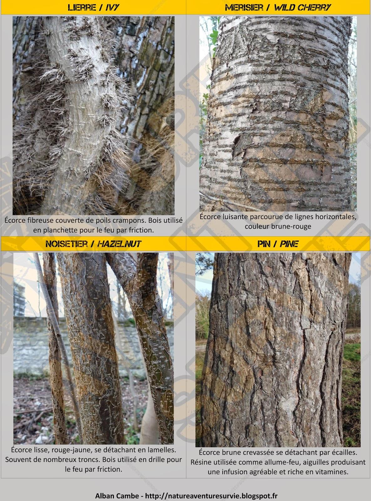 identifier les arbres en hiver nature aventure survie. Black Bedroom Furniture Sets. Home Design Ideas