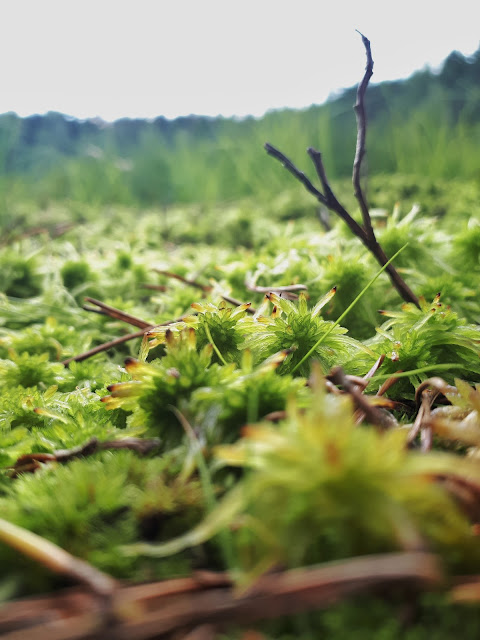 The forest around Devil's lake / Velnezers lake in Latvia