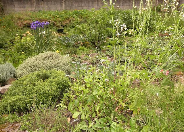 huerta, jardin