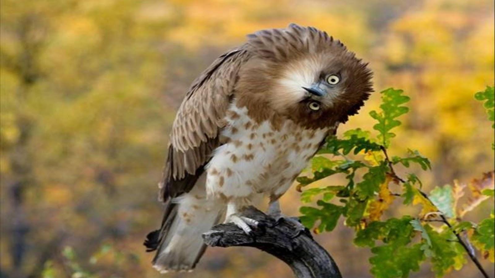 الطيور الجميلة البومة,الطيور,Beautiful bird,الطيور الجميلة, خلفيات طيور, خلفيات, 8K خلفيات,