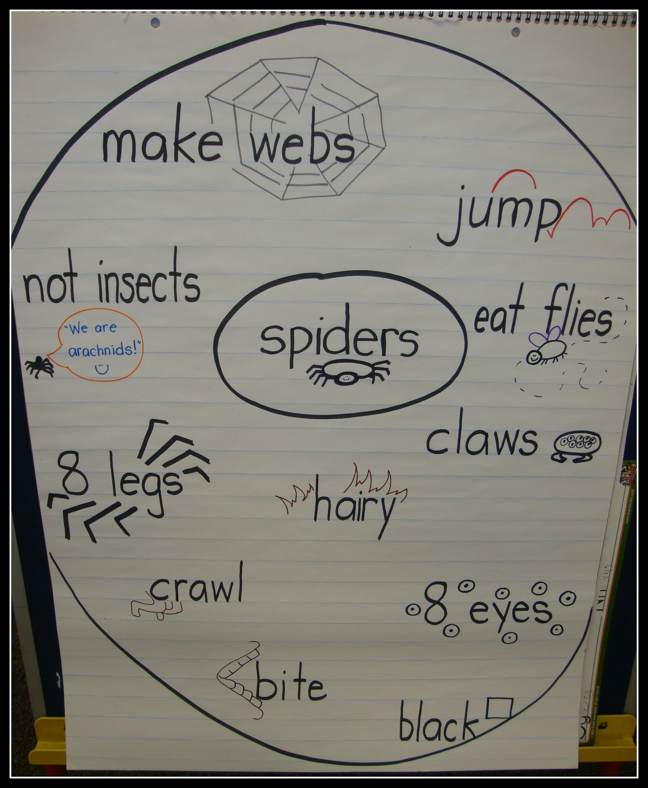 Today In First Grade  Spiders  Spider  Spiders  I actually make a rough version on the white board with ALL of their ideas  first  but for writing I narrow it down to some of the more specific  details and