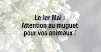 Le 1er Mai : Attention au muguet pour vos animaux !