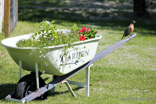 stencils, fusion mineral paint, giveaway, wheelbarrow, garden junk, planter, robin, http://bec4-beyondthepicketfence.blogspot.com/2016/05/welcome-to-my-gardenstencil-paint.html