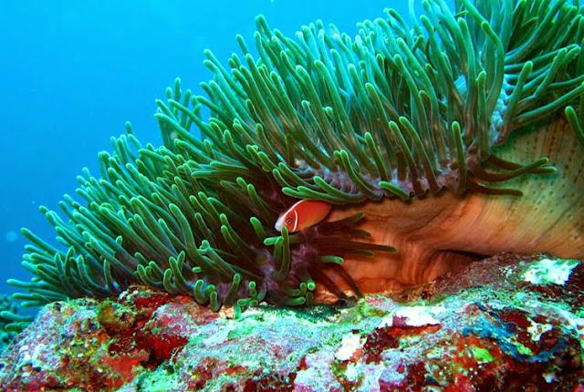 Wakatobi Marine National park