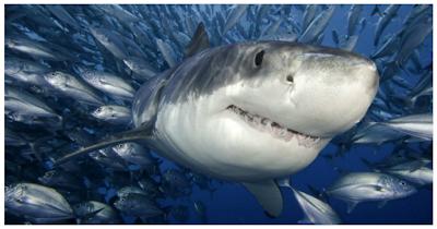 """<img src=""""shark.png"""" alt=""""shark"""">"""