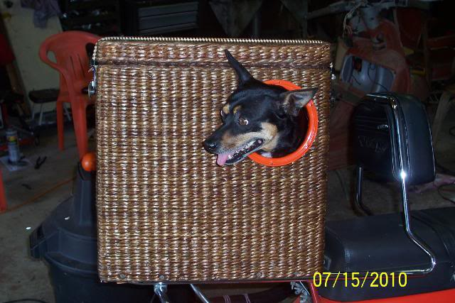 Dog Basket: Dog Basket For Moped