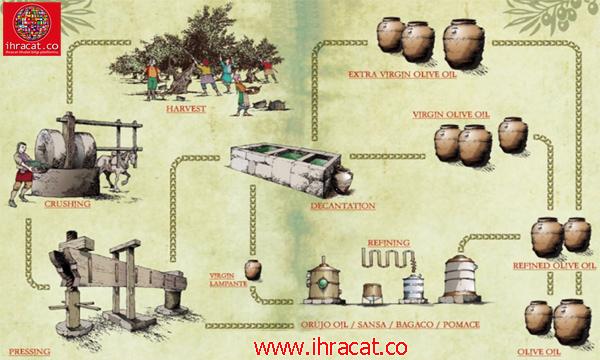 oliveoil, olive export