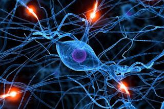 Scoperte nuove molecole per terapia sclerosi multipla