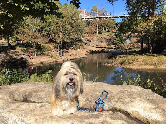 Falls Park Greenville Rocco Havanese Dog