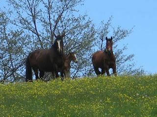 Cavallo Ventasso