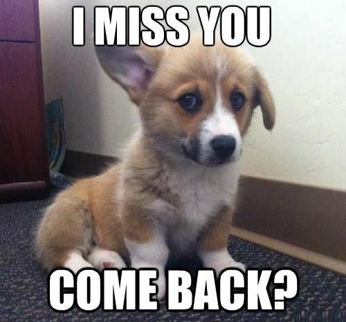 i miss you meme  12