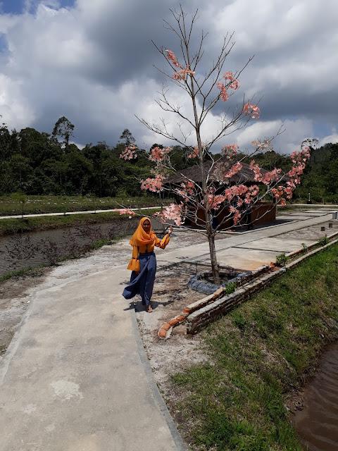 Sibio bio Marancar Sumatera Utara