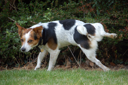 Dog Blog: Castration ~ Effects on male dog health and behaviour