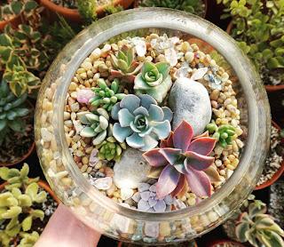Succulent terrarium in glass bowl
