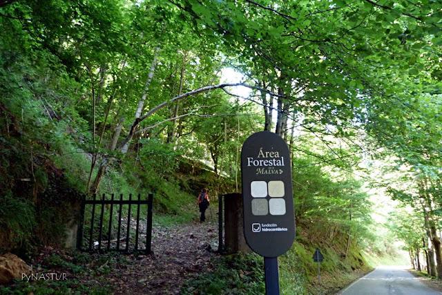 Área Forestal de La Malva - Parque Natural de Somiedo - Asturias