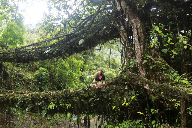 Double-Decker-Living-Root-Bridge-Meghalaya