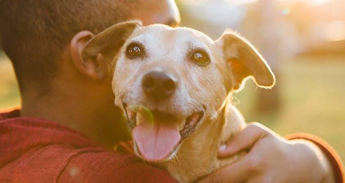 Cani addestrati per rilevare malaria, tumori e rischio di coma diabetico.